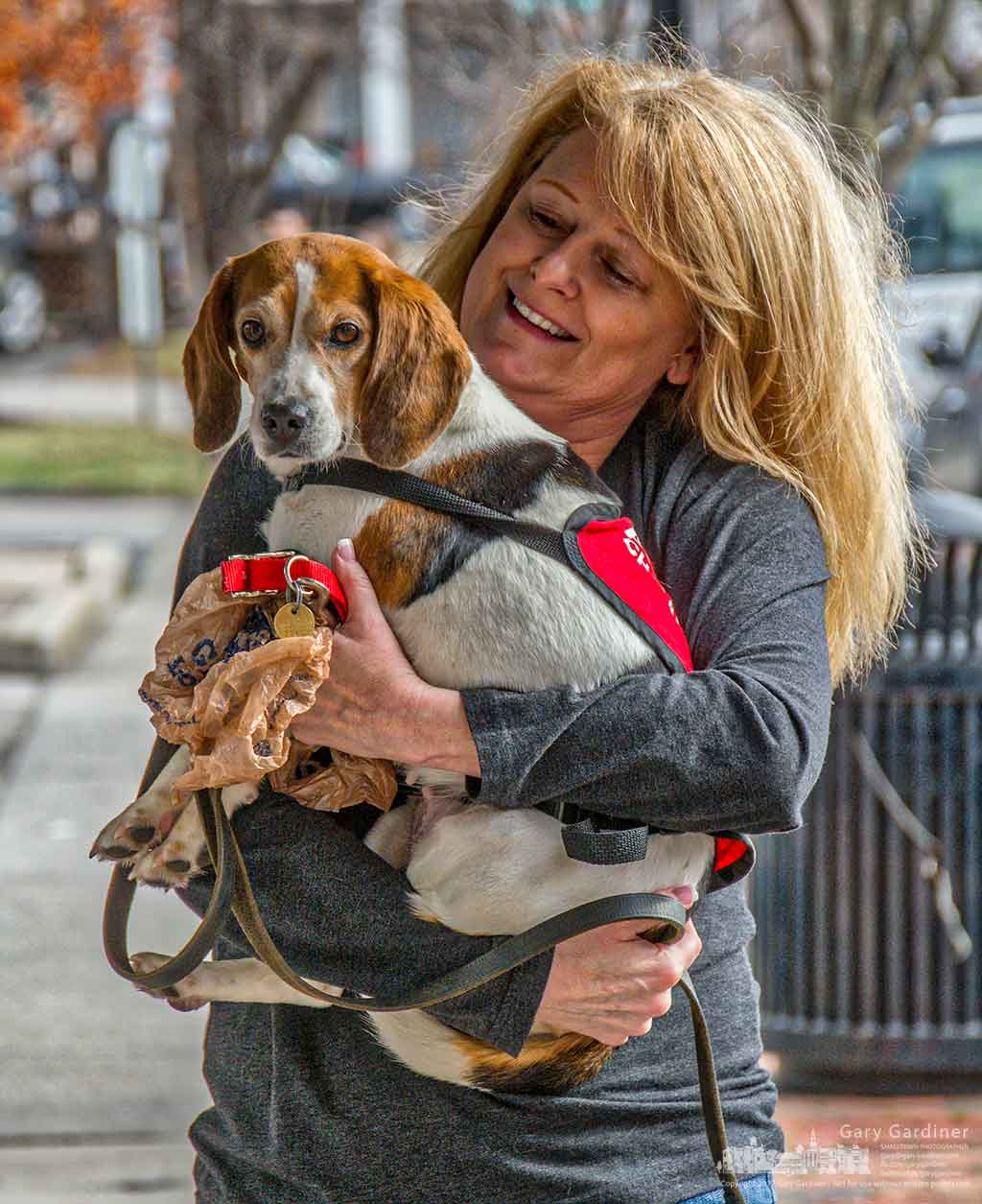 A handler from the CHA Animal Shelter retrieves a Beagle after it avoided its leash on the way to an adoption event at Captivating Canines in Uptown Westerville. My Final Photo for Jan. 21, 2017.
