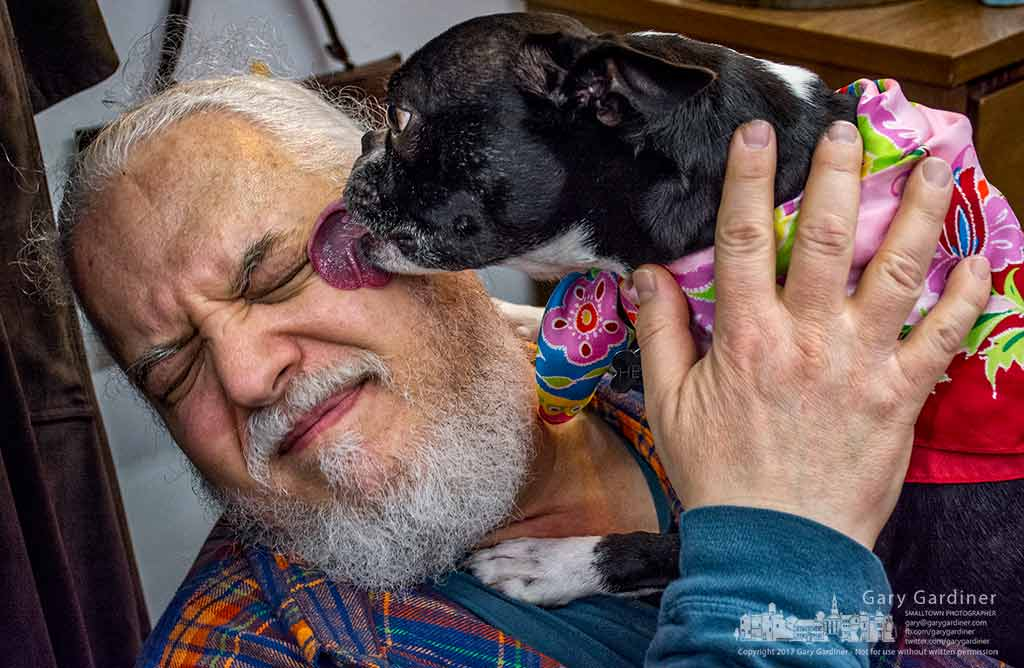 Henry the Boston get in a few licks as he greets a familiar customer at Cinda Lou Shop in Uptown Westerville. My Final Photo for Jan. 12, 2017.