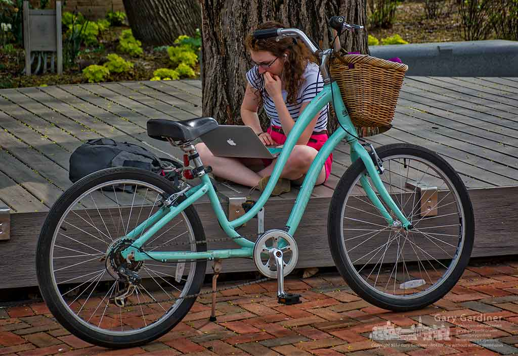 A student studies her computer sitting beside her bike on the deck beneath the gingko tree at city hall Wednesday afternoon. My Final Photo for April 19, 2017.