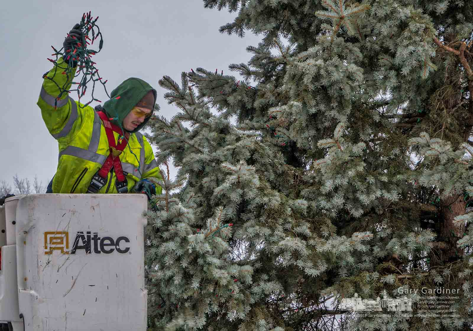 A city electrician removes strands of LED lights from the evergreen tree in front of city hall that stood during the Christmas season. My Final Photo for Jan. 8, 2018.
