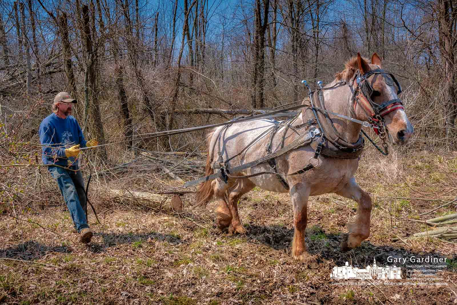 Farmer Rodney Parker guides 15-year-old Belgian draft horse, Bell, as she drags timber from fields on Africa Road being cleared for field crops this summer. My Final Photo for April 11, 2018.