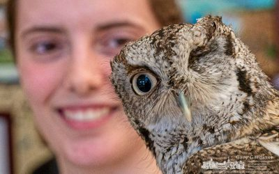 One-Eyed Owl Wows Students