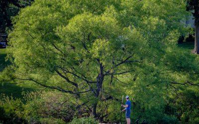 Fishing The Green Shoreline