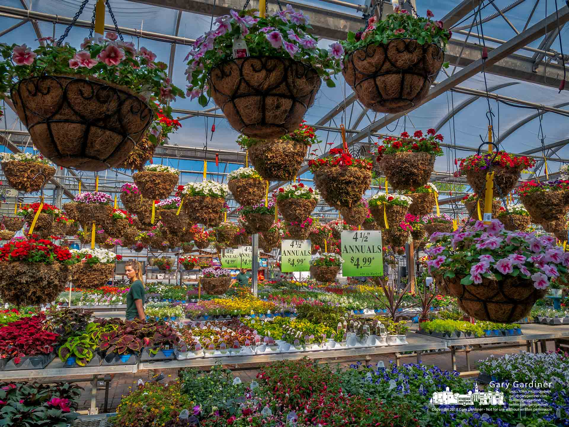 A gardener walks through one of the greenhouses at Hoover Gardens filled with flowering hanging baskets and trays of annuals destined for home gardeners in Westerville. My Final Photofor May 10, 2018.