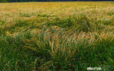 Braun Farm Hay After Storm