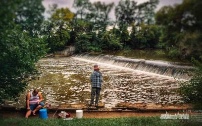 Fishing And Browsing At The Dam