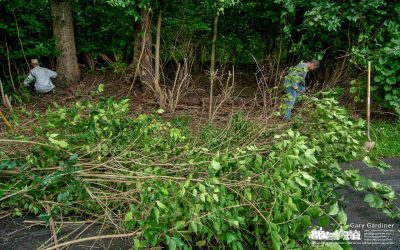 FACT Clearing Out Invasive Species