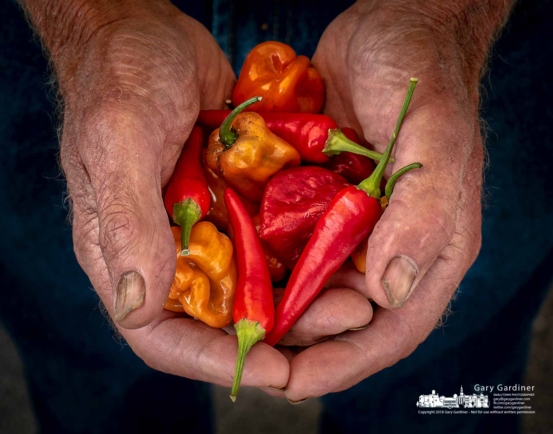 Jim Doran holds two handfuls of peppers brought to the Uptown Westerville Farmers Wednesday. My final Photo for Aug. 22, 2018.