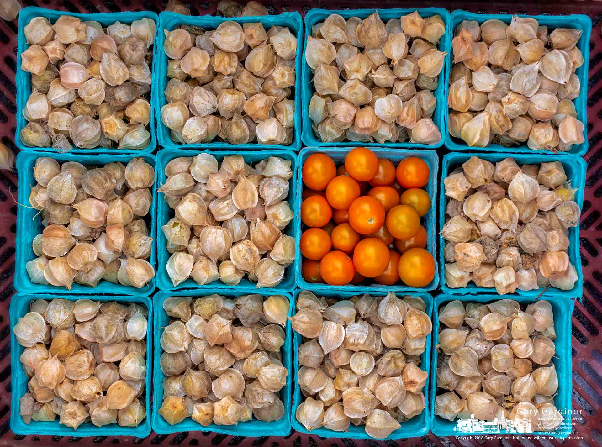 A basket of orange cherry tomatoes sits in a crate of ground cherries set aside for CSA customers at the Uptown Westerville Farmers Market. My Final Photo for Aug. 29, 2018.