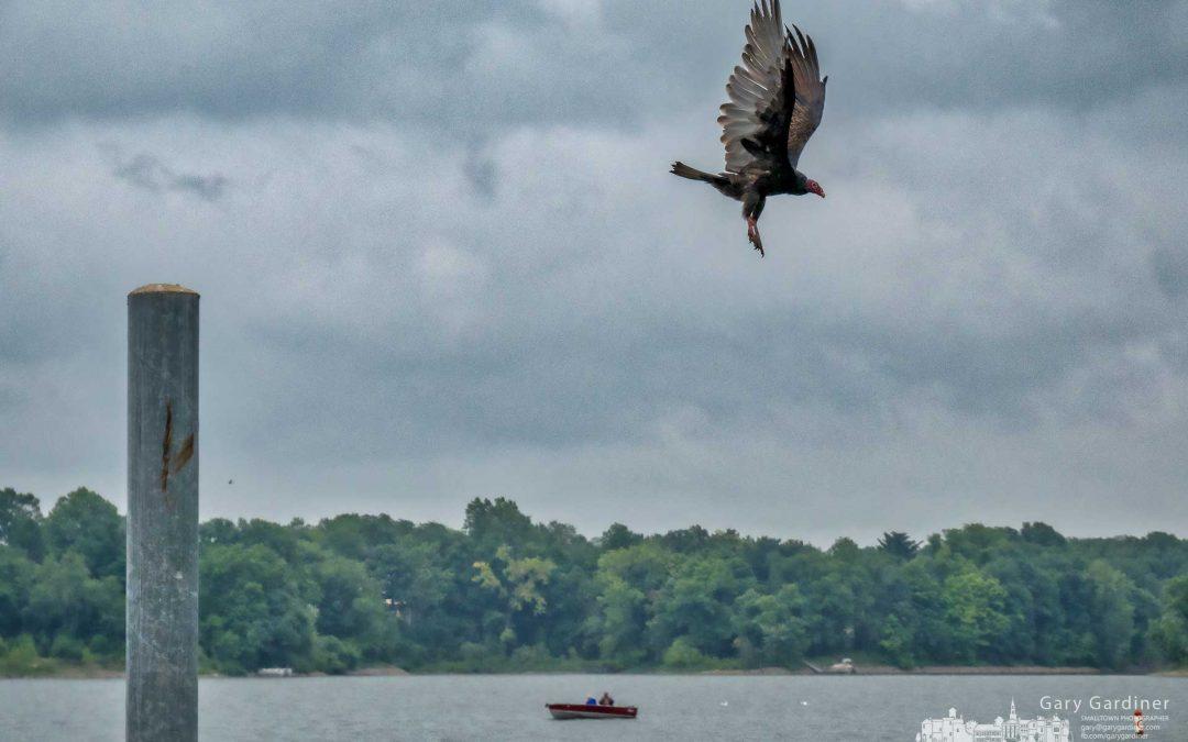 Turkey Vulture Launch