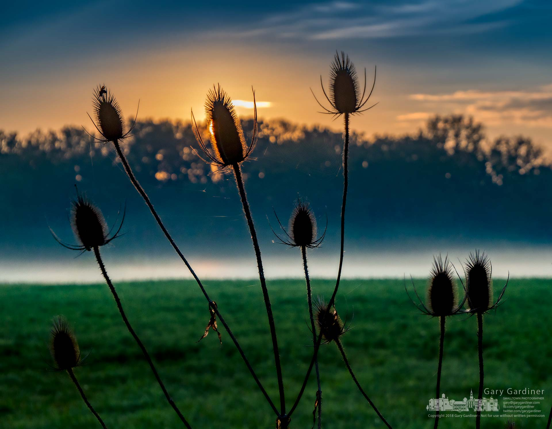 Thistles connected with spider webs silhouette against the morning sun breaking over trees along the bikepath beside Alum Creek as fog over the hayfield begins to rise. My Final Photo for Oct. 8, 2018.