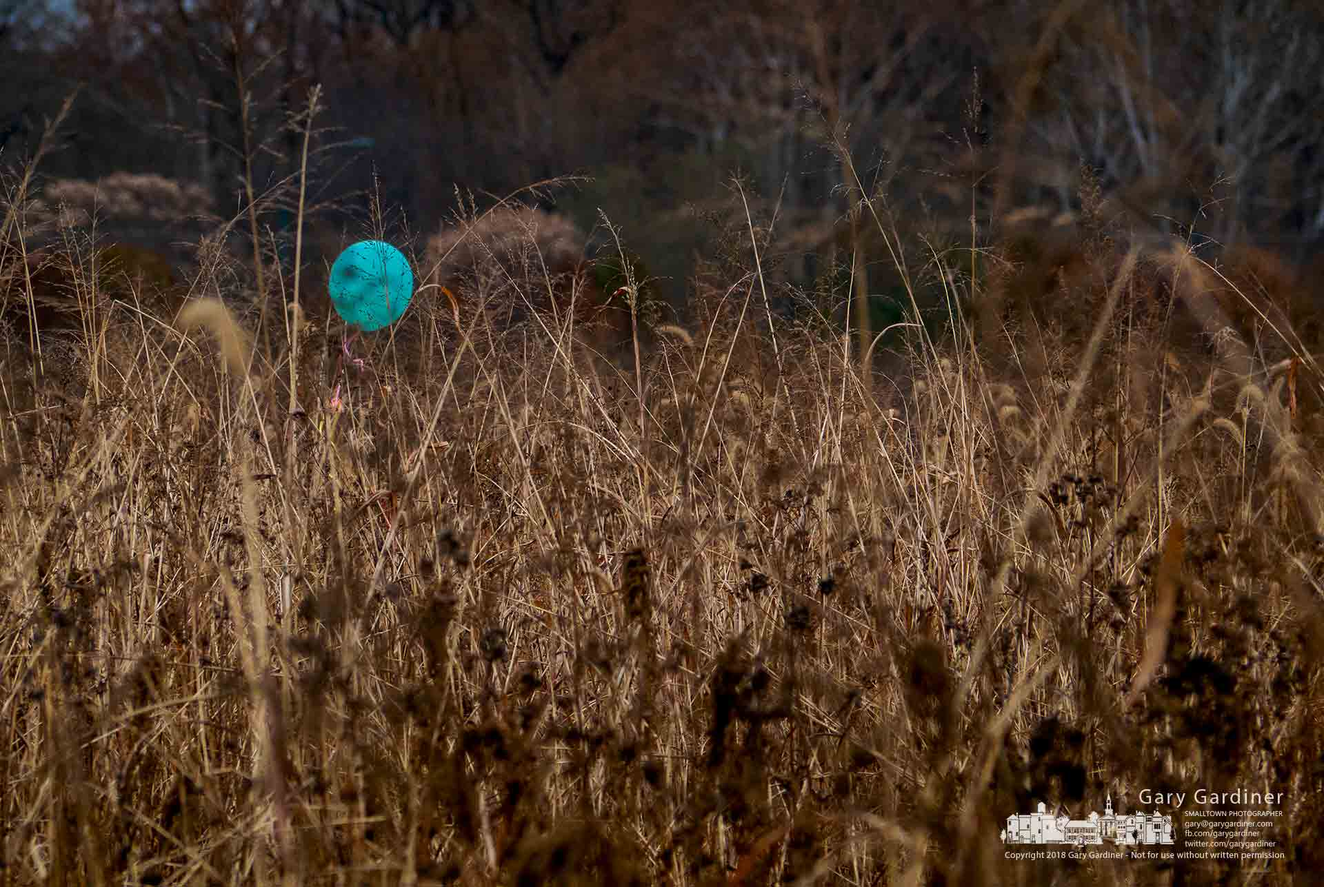 A blue balloon, its string trapped in tall grass in the overgrown field at the Braun Farm, slowly sways in the gentle breeze blowing over the old farm. My Final Photo for Nov. 12, 2018.