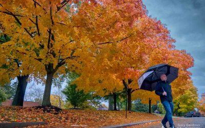 Under Rainy Skies and Golden Maples