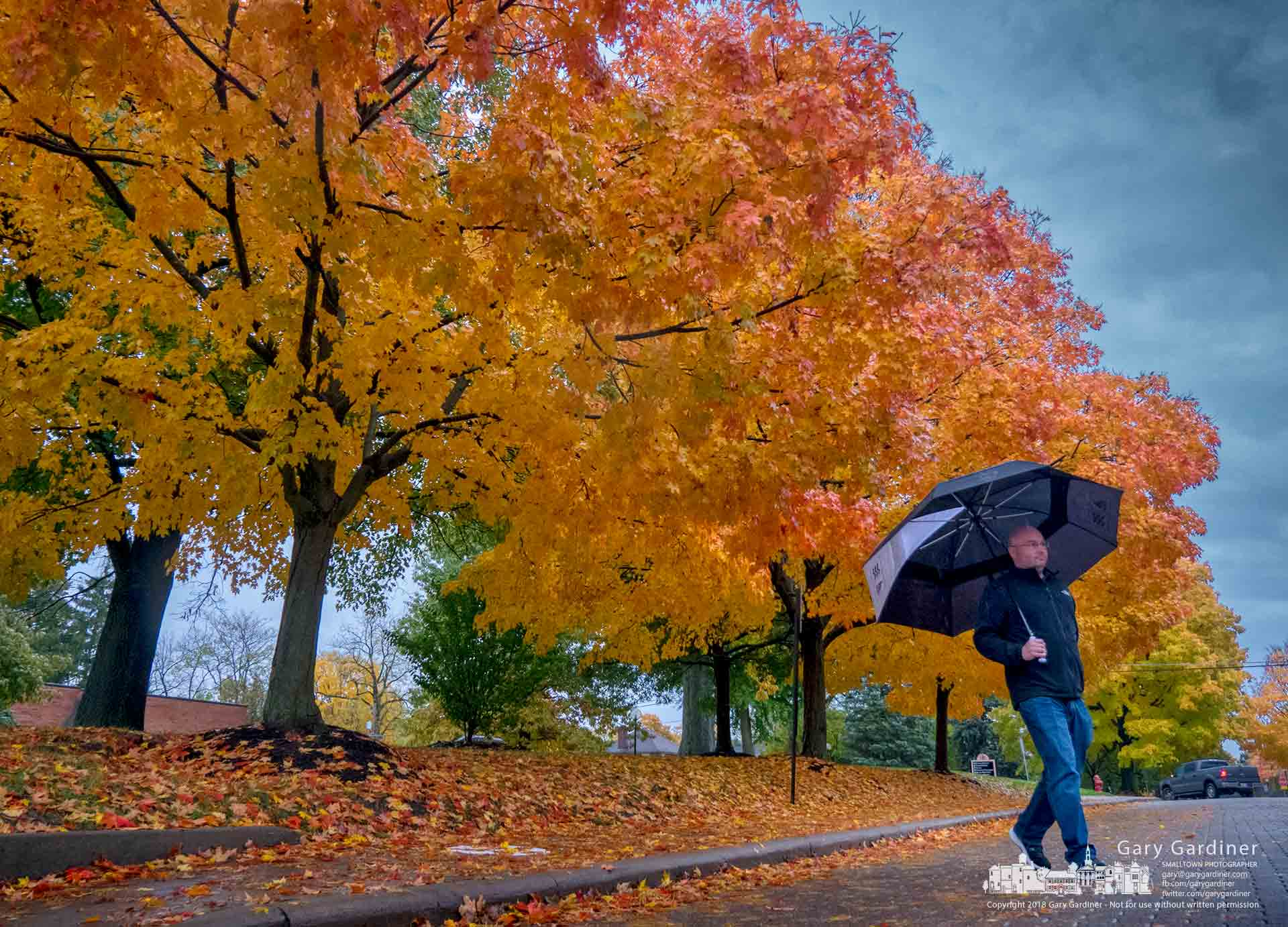 A man carrying an umbrella crosses Grove Street on the Otterbein University campus after making part of his travels under the umbrella of maple trees turned to gold in the fall. My Final Photo for Nov. 1, 2018.