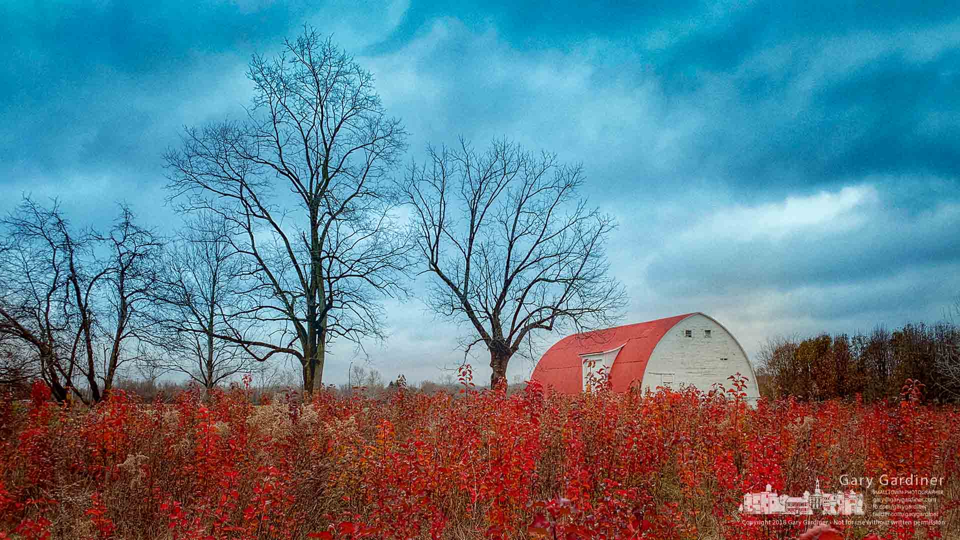 Wild pear trees, their leaves turned red in the fall, are the dominant deciduous tree growing on uncut sections of the Braun Farm. My Final Photo for Dec. 3, 2018