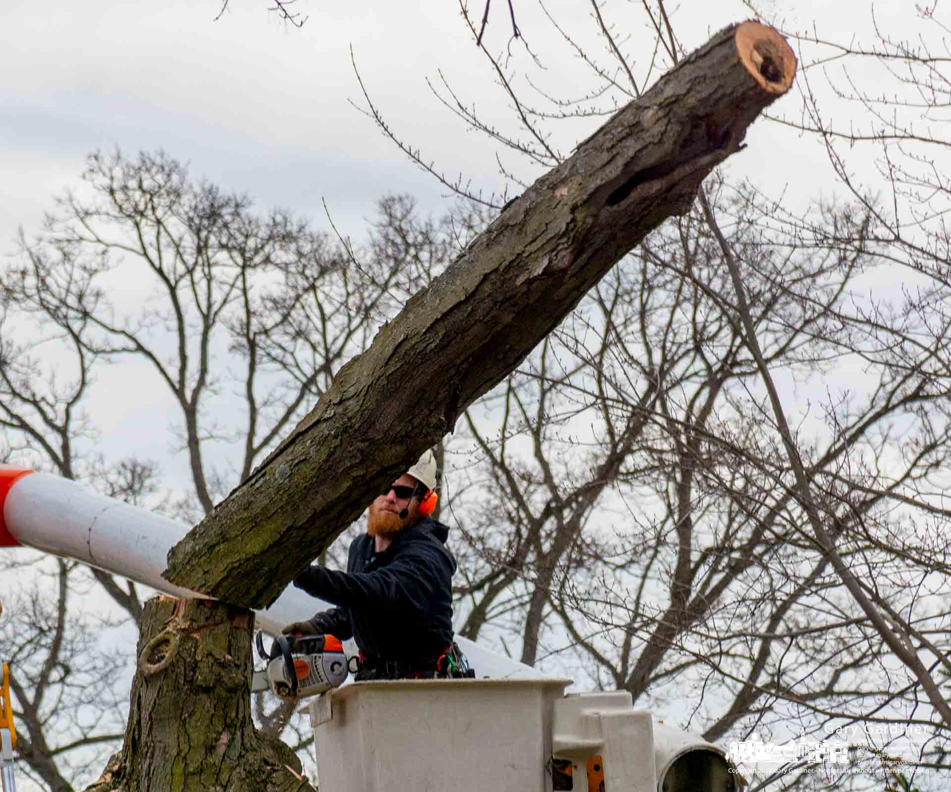 A tree trimmer watches a felled section of tree fall to the ground during tree removal on the Otterbein campus during winter break. My Final Photo for Dec. 27, 2018.