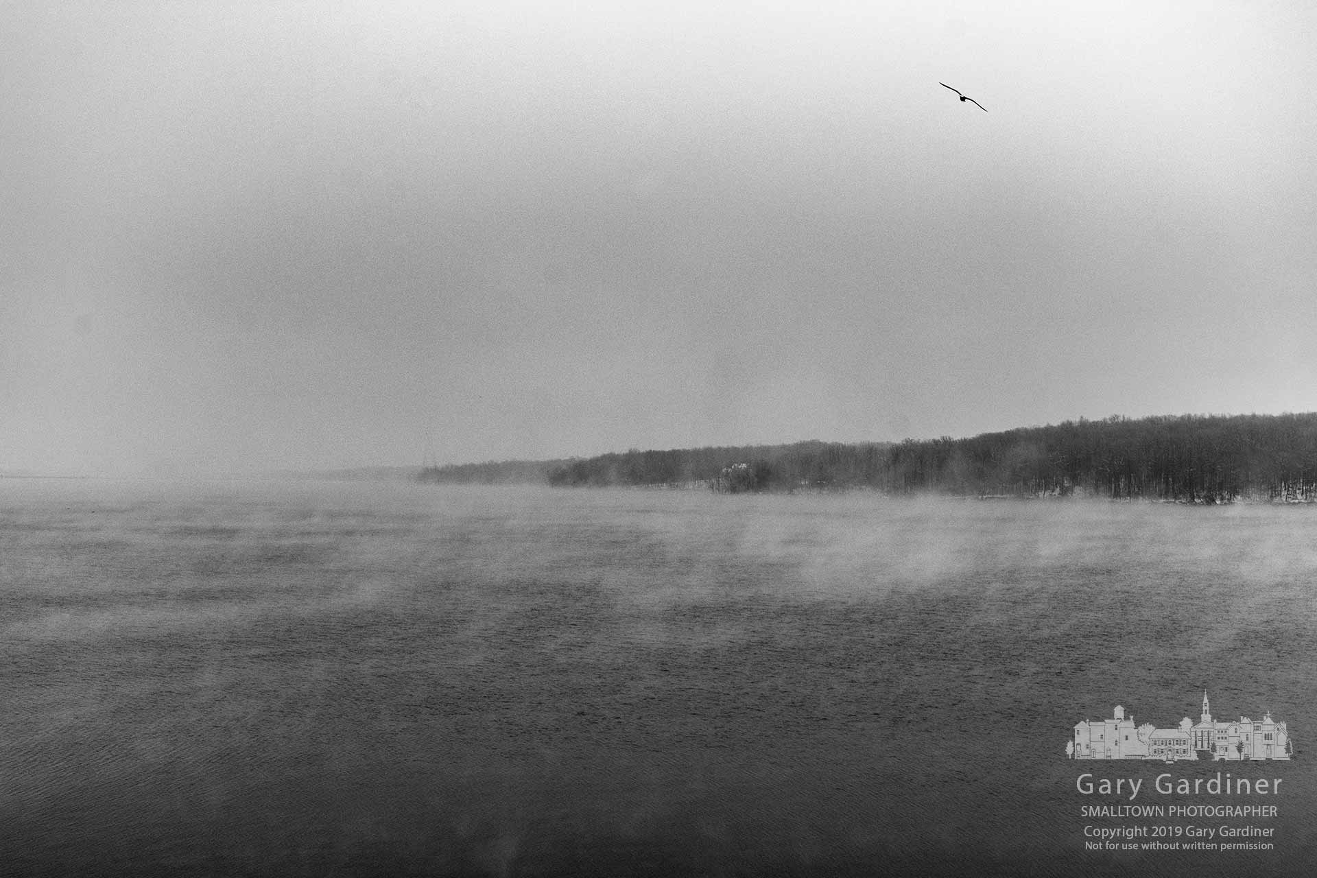 A seagull searches for a winter meal flying over the waters of Hoover Reservoir on a below-freezing morning that saw the lake covered in a light layer of fog. My Final Photo for Jan. 15, 2019.