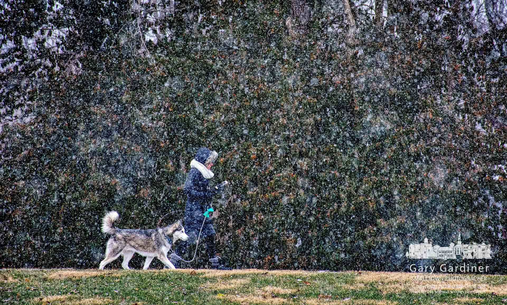 A woman checks her phone while walking her dog early Saturday morning as the first snow of the day begins to fall. My Final Photo for Jan. 12, 2019.