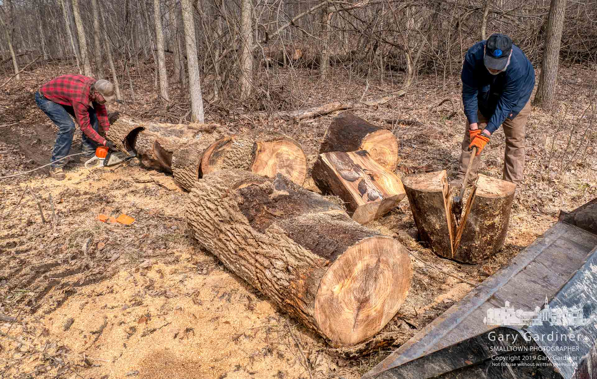 Farmer Kevin Scott, right, splits sections of ash tree into firewood after it was collected from fields along Africa Road where it was cut last year to help stop the spread of the ash borer beetle. My Final Photo for March 1, 2019.