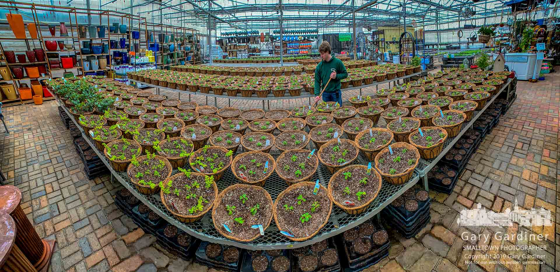 The beginning of Hoover Gardens' spring baskets line portions of the greenhouse tables as the company prepares for customers who favor early plantings before the warmth of summer. My Final Photo for March 10, 2019.