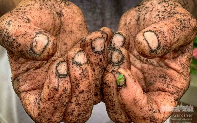 A Gardener's Hands