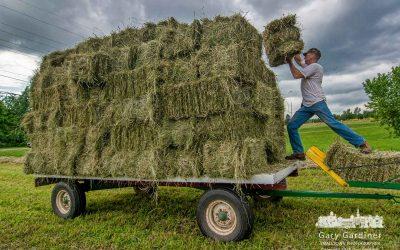 Hay Harvest Deadline