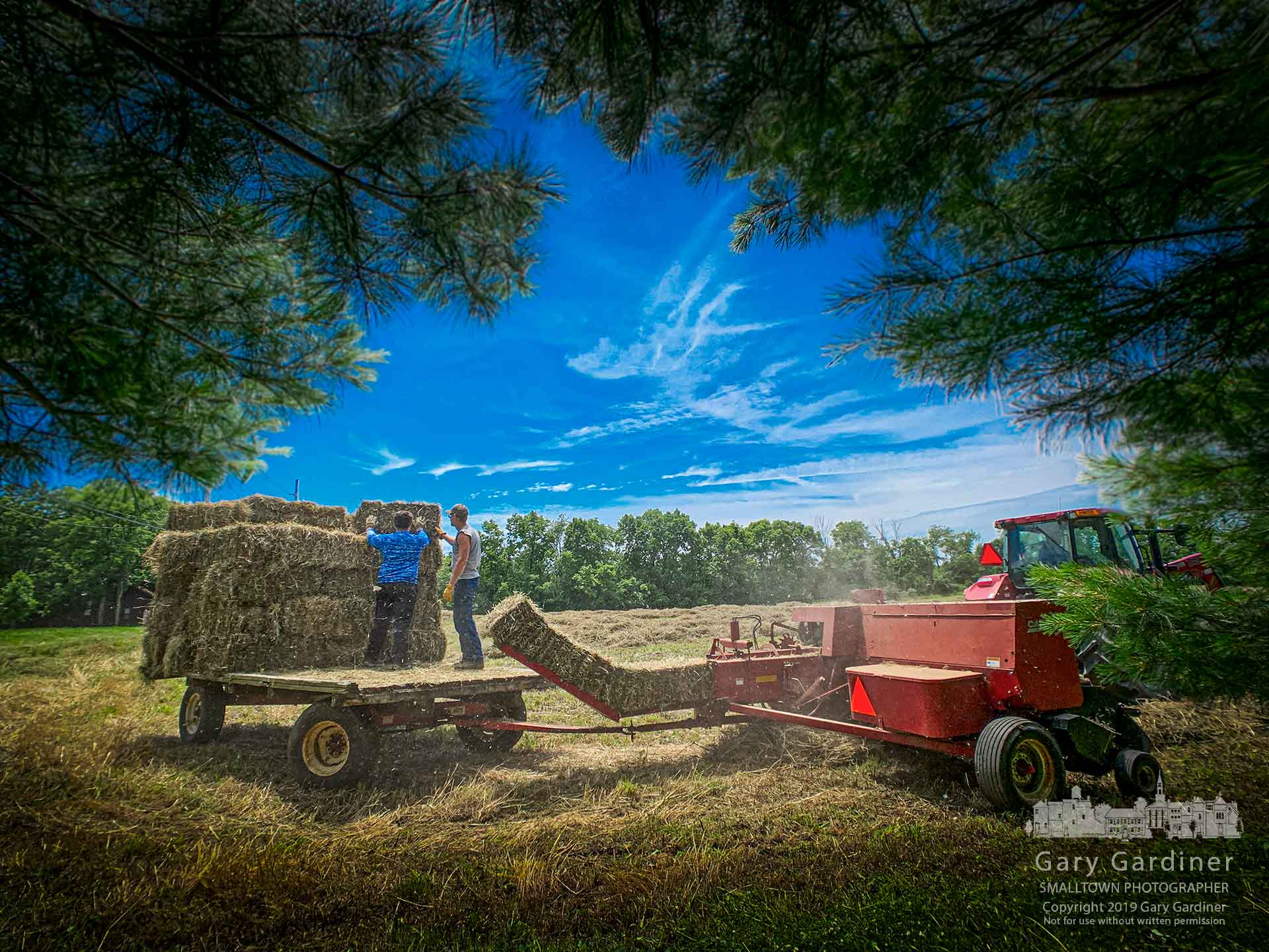 A pair of farmhands load hay bales onto a wagon pulled behind Kevin Scott's tractor at a field on North West Street where developers are planning to build office buildings and apartments after the planning commission and city council approve a design that meets zoning and density requirements. My Final Photo for June 23, 2019.