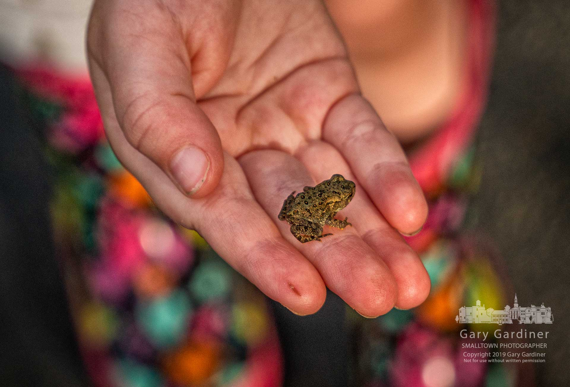 A three-year-old girl holds a juvenile toad found along the trail at the wetlands in Highlands Park Sunday afternoon. My Final Photo for June 16, 2019.