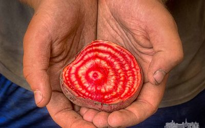 Farm Hands and A Beet