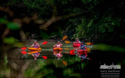 Kayaking Quartet