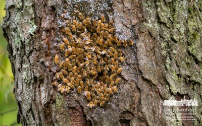 Old Tree Bee Hive