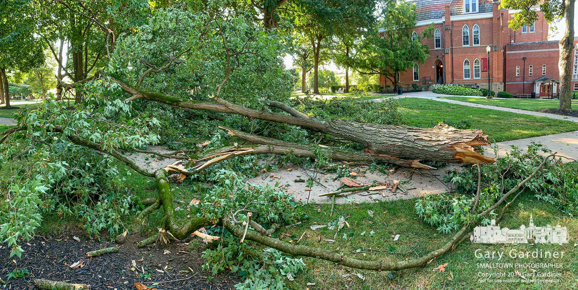 A large sectional trunk of a mature tree adjacent to Towers Hall on the Otterbein University campus lies across a sidewalk where it fell during an overnight storm. My Final Photo for Aug. 9, 2019.