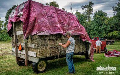 Rain-Delayed Hay Harvest