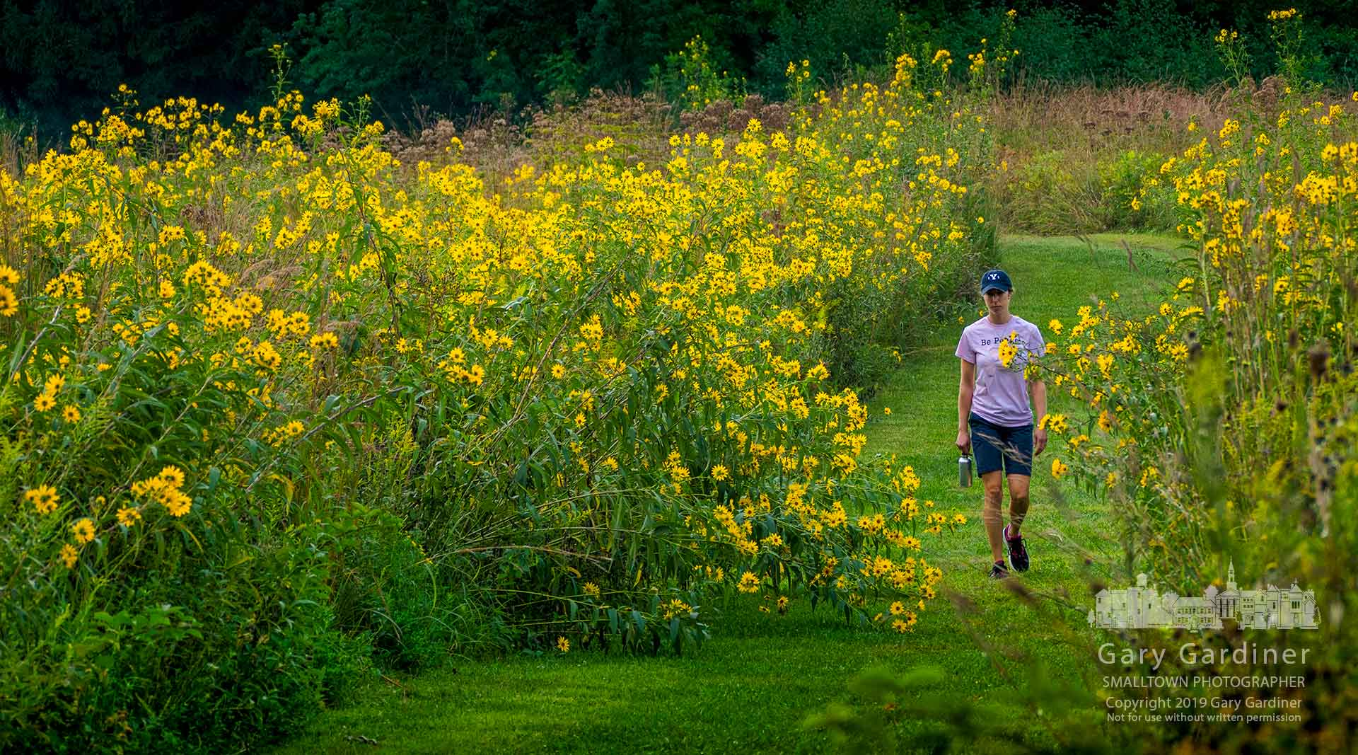 A woman walks through a section of a path narrowed by wildflowers falling across the mowed portion at Sharon Woods. My Final Photo for Sept. 7, 2019.