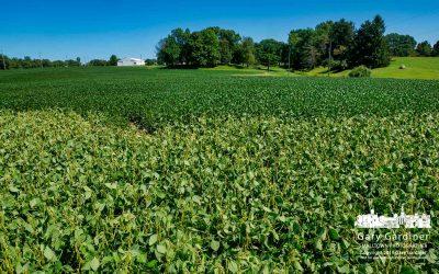 Farm Field Growth Fixed