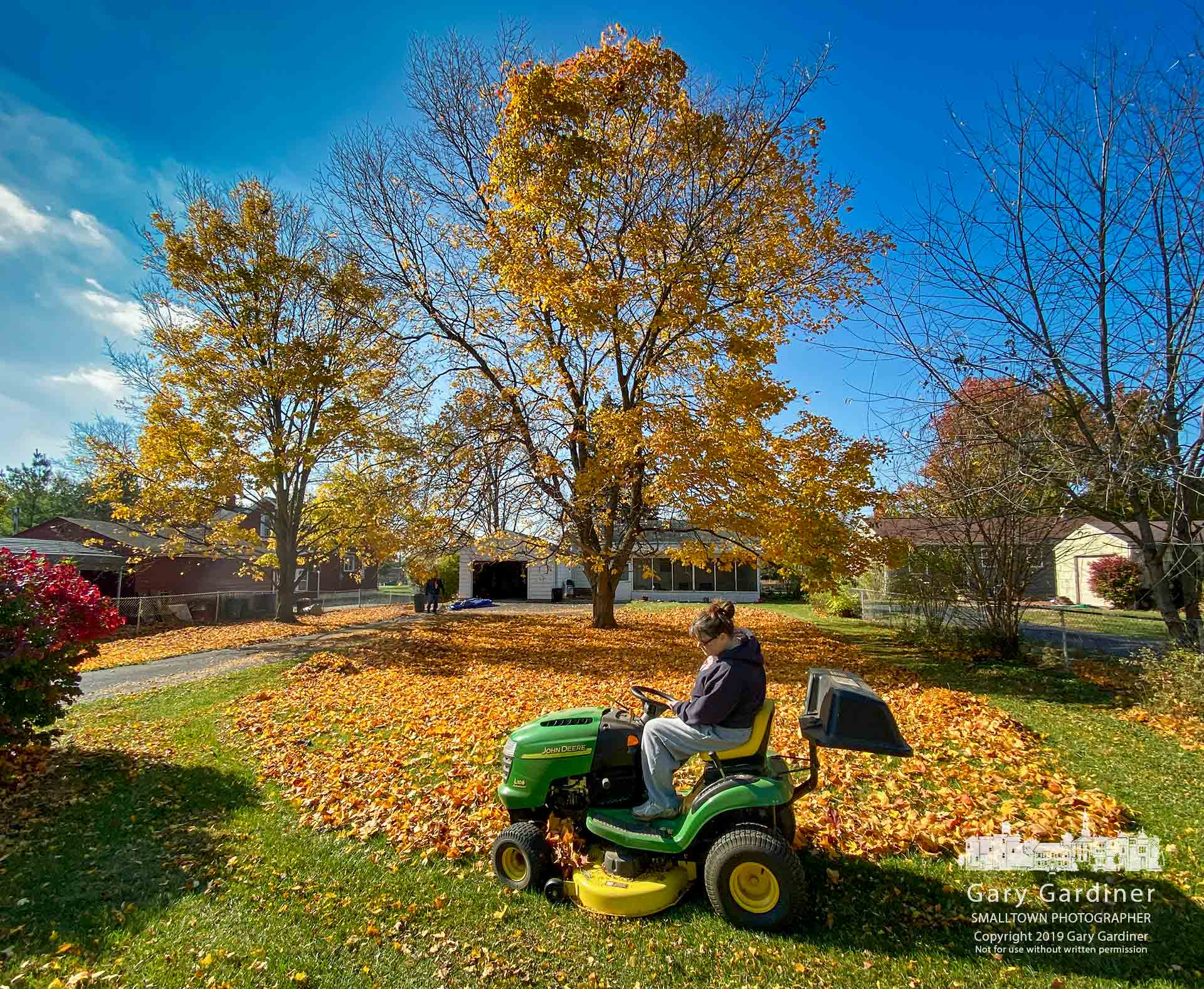 A homeowner uses her newly purchased John Deere mower to move leaves into a tighter circle before raking them into a large tarpaulin and taking them to the curb. My Final Photo for Nov. 1, 2019.