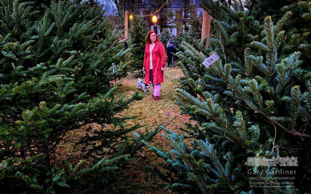 Christmas Tree Search
