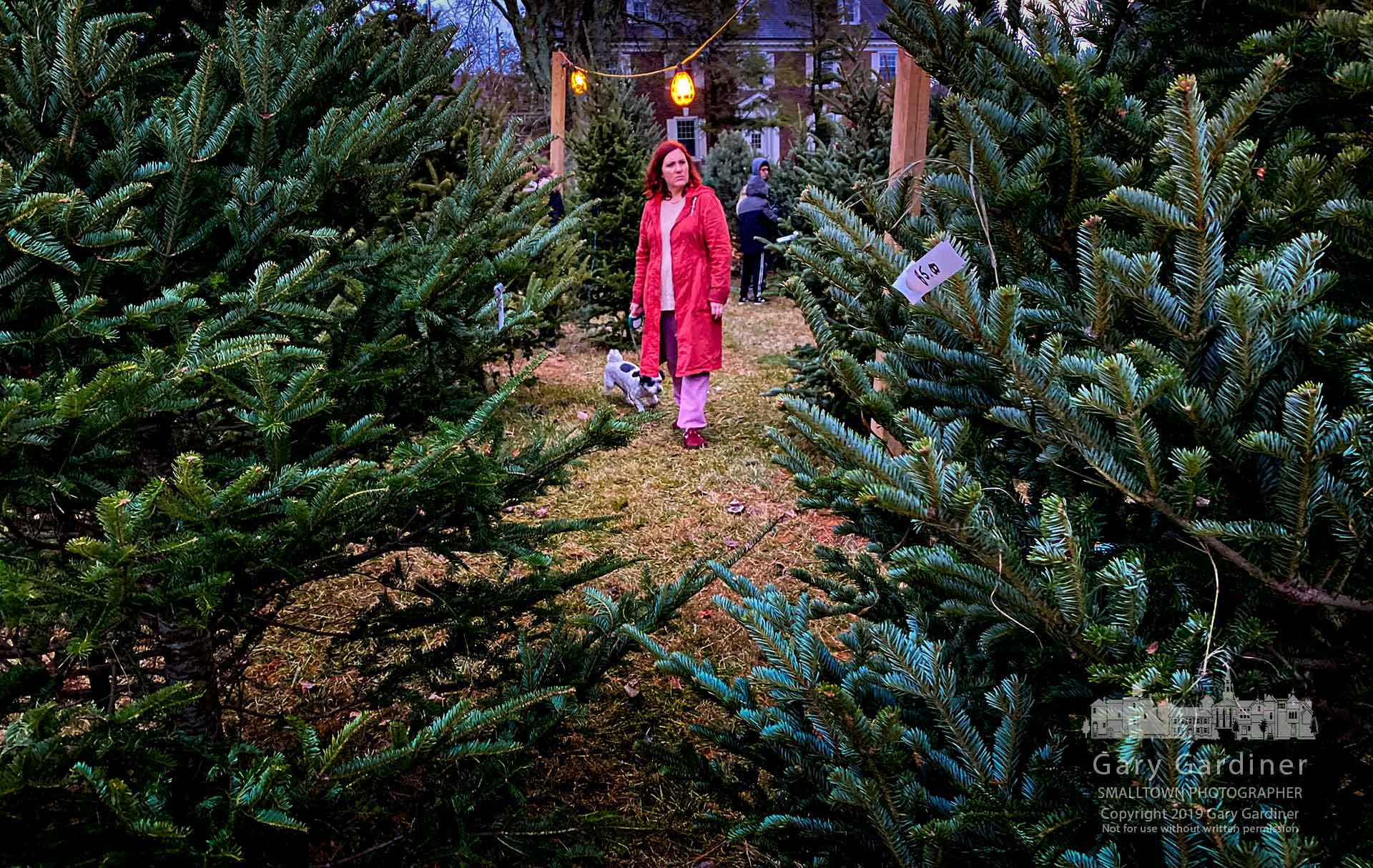 A woman walks through the selection of Christmas trees in the Troop 192 sales lot at Central College Church hoping to find the perfect size and shape for her home. My Final Photo for Dec. 1, 2019.