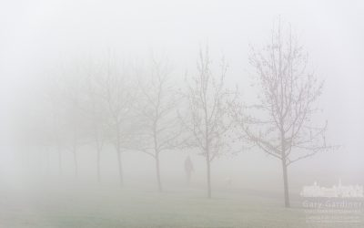 Morning Walk In The Fog