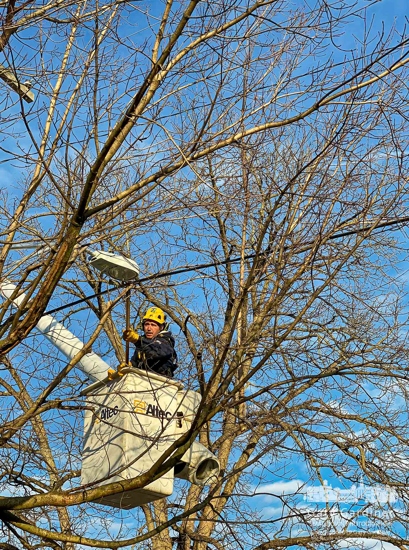 A Westerville City Electric worker trims errant branches growing into power lines along an alley in Uptown. My Final Photo for Dec. 26, 2019.