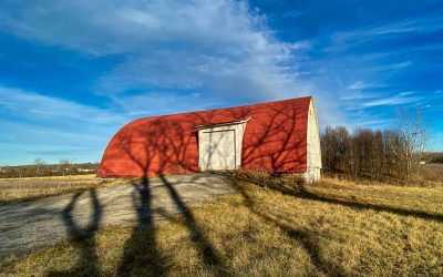 Walnut Tree Shadows In Ohio