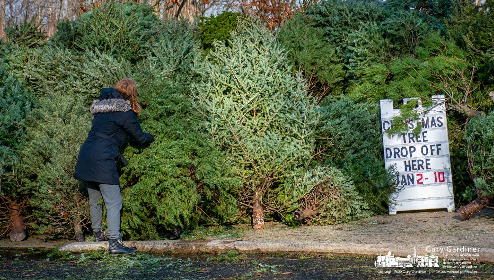 A woman steadies her discarded Christmas tree into place at the Alum Creek Lake Visitors Center where the tree and collection of other families trees are destined to be used as fish habitat in the lake. My Final Photo for Dec. 5, 2020.