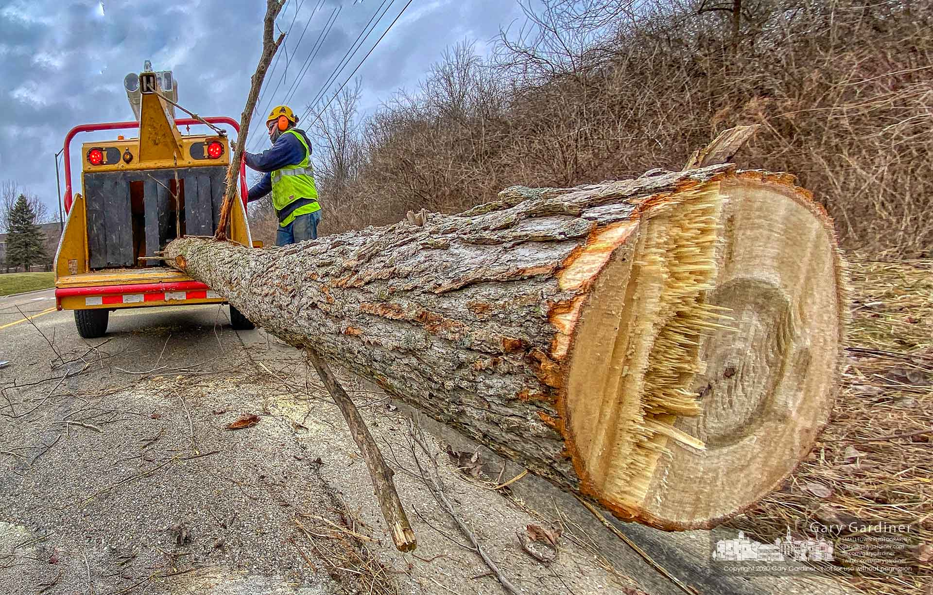 City electric workers load a tree trunk into a shredder after clearing power lines on Africa Road. My Final Photo for Feb. 11, 2020.