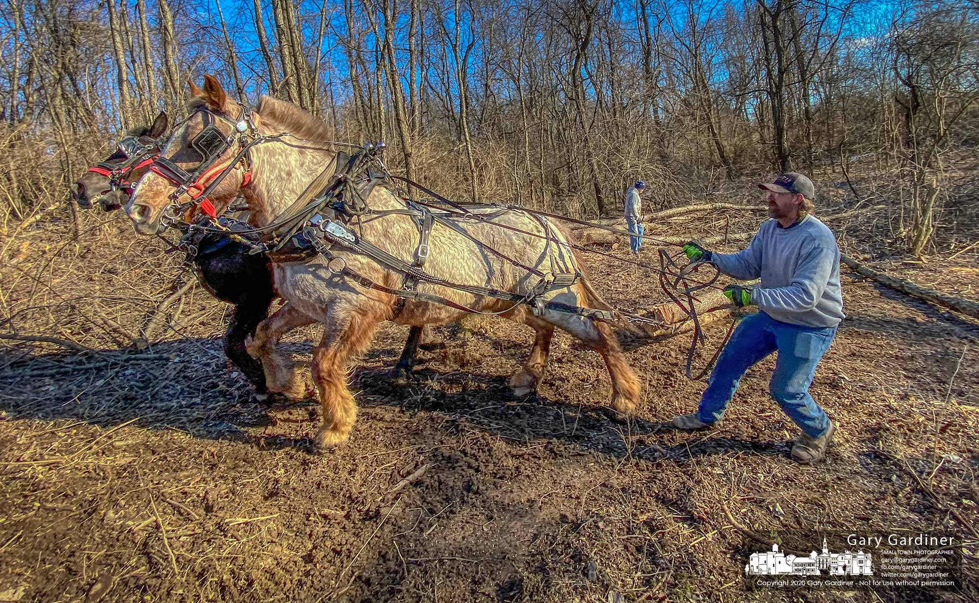Draft horses Belle and Stormy pull logs and their owner, Rodney Parker, from woods being cleared along Africa Road. My Final Photo for Feb. 29, 2020.