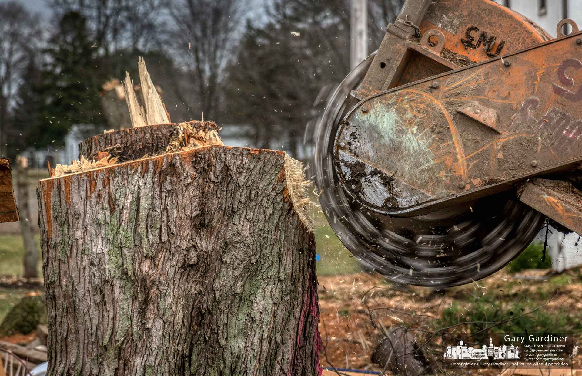 A stump grinder begins the process to reduce a silver maple tree stump to sawdust as clearing operations continue at property along Africa Road for a skilled-nursing medical facility. My Final Photo for March 10, 2020.