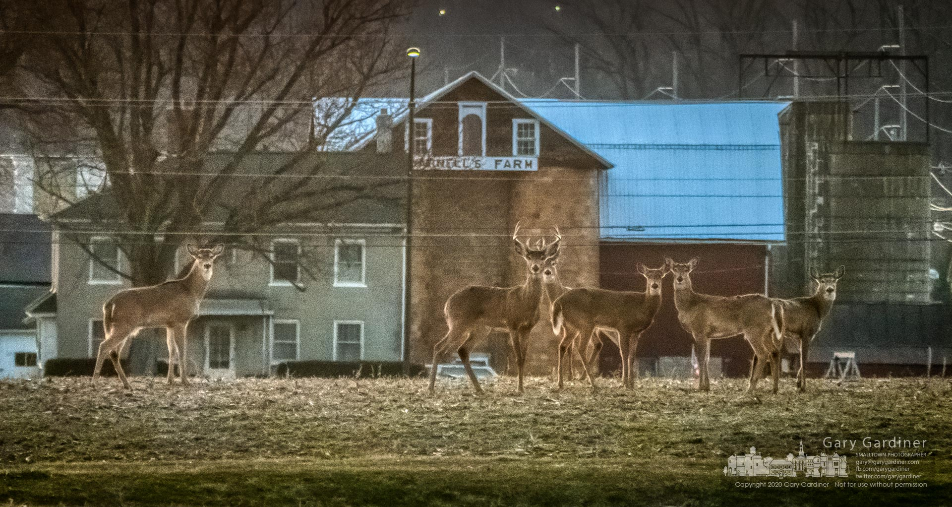 A pair of bucks and four doe stand alert in the Yarnell farm field along Africa Road just after sunset Saturday. My Final Photo for March 7, 2020.