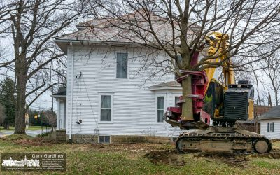 Trees Felled For New Buildings