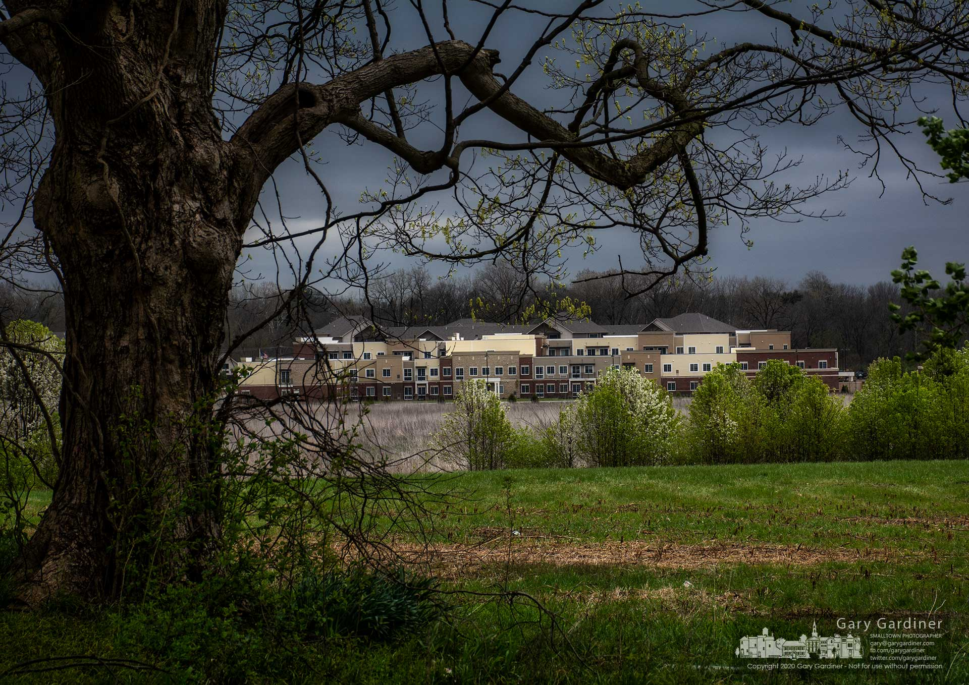 The maple tree that sits in the yard of the Braun Farm house frames the lower fields of the farm where hay grasses begin to grow in the spring and the new senior housing was built across Cooper Road from apartments still under construction. My Final Photo for April 13, 2020.