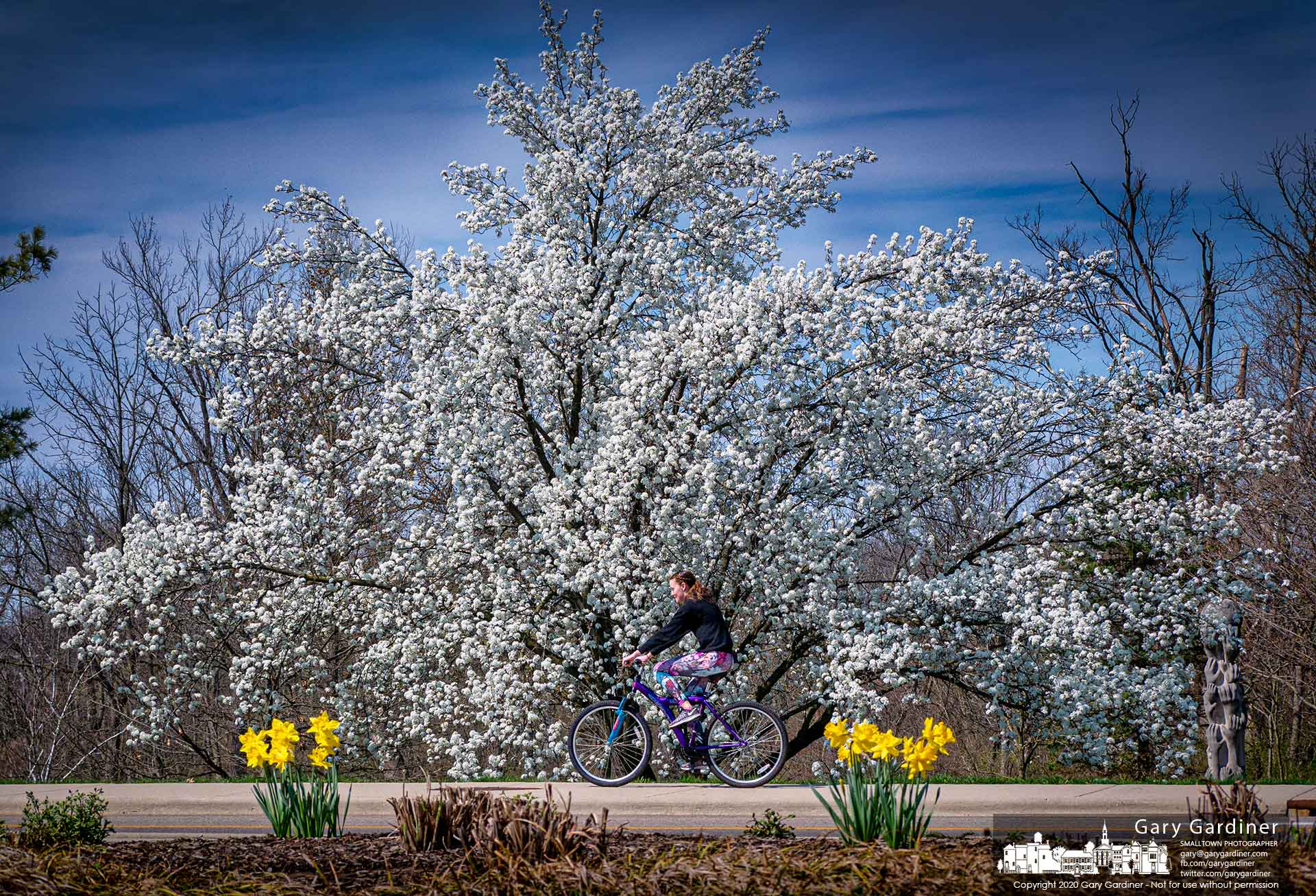 A young girl pedals along the sidewalk past flowering Bradford pear trees in Astronaut Park on West Main Street. My Final Photo for April 4, 2020.