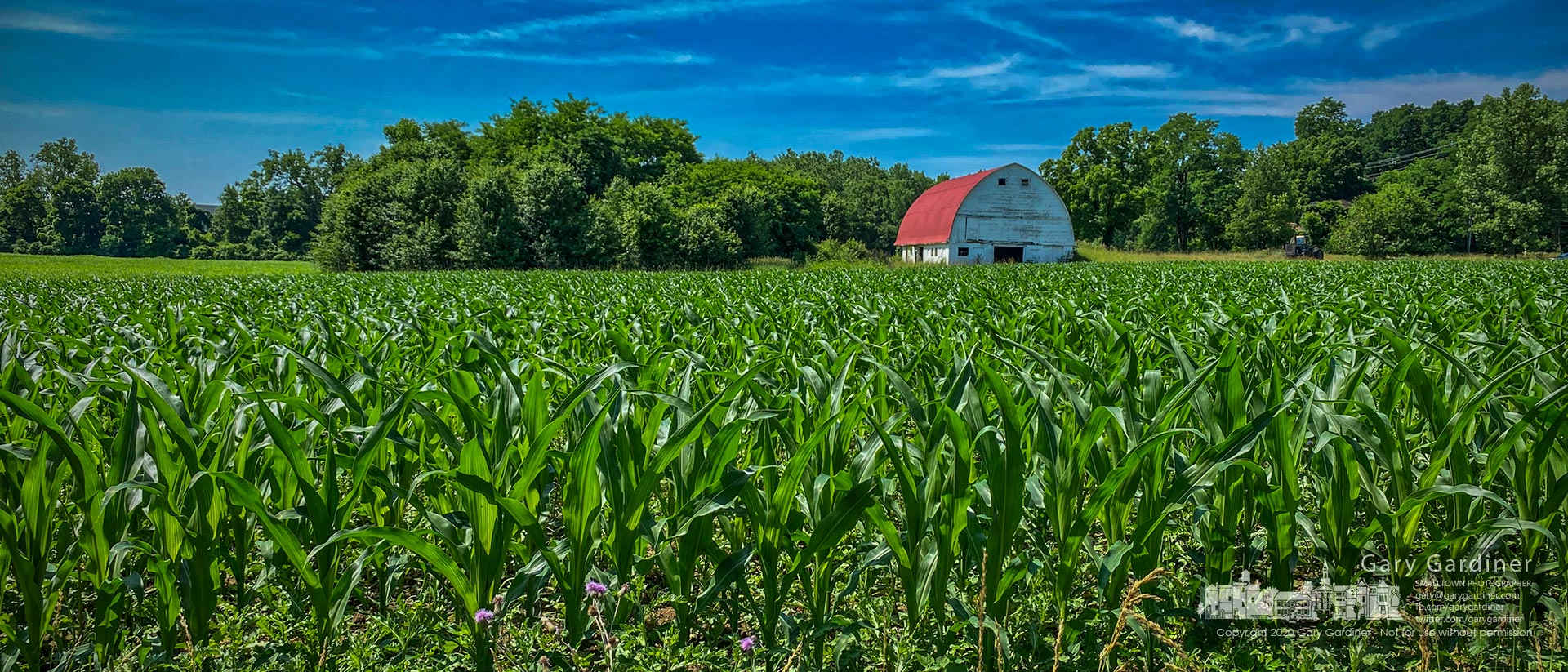 Rows of corn near the barn on the Braun Farm grow taller and wider fed by frequent rains followed by sunny weather. My Final Photo for June 29, 2020.